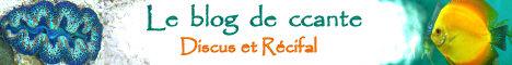Le blog de ccante - Discus et Récifal