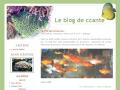 Le blog de ccante - Discus et Récifal.